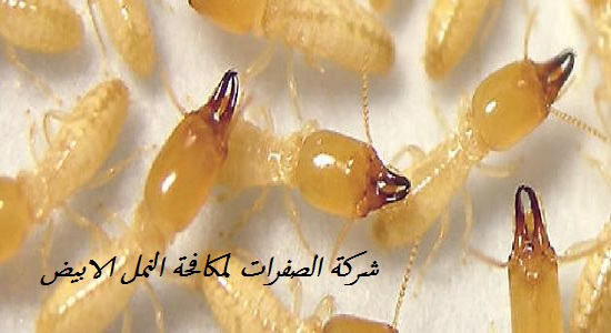 شركة الصفرات لمكافحة النمل الابيض